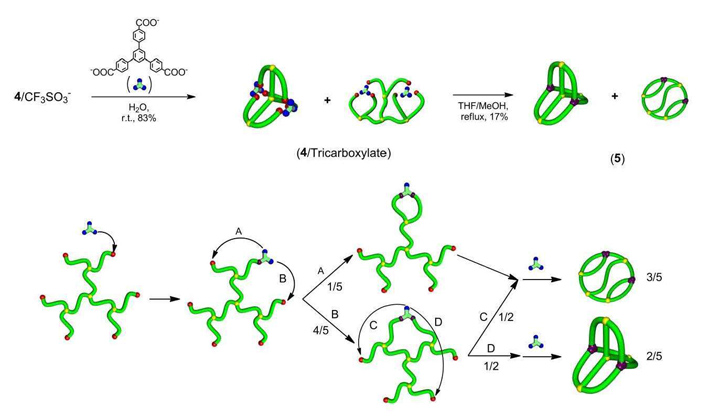(top) The researchers developed a method combining electrostatic self-assembly and covalent fixation to construct two geometries of triply fused tetracyclic polymer labelled (5). The products were made from molecules with several branches and two negatively charged groups.(bottom) a scheme showing random combination of the end groups during covalent conversion to form the two types of triply fused tetracyclic polymer.