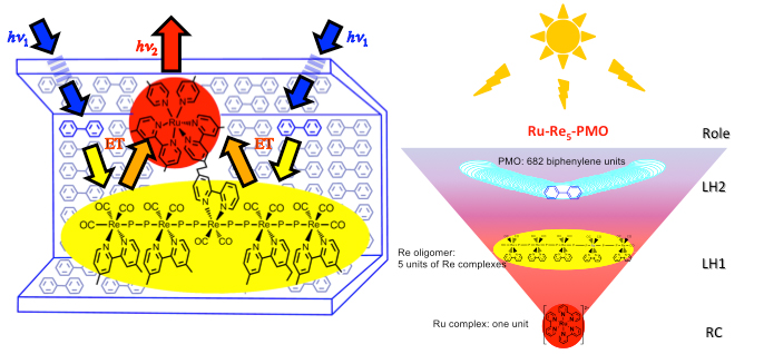 (Left) A ruthenium complex connected to the center of the rhenium tetramer is adsorbed into the mesopores of periodic mesoporous organosilica (PMO). (Right) Photons absorbed by PMO framework are first concentrated to the rhenium oligomers, and then to the ruthenium reaction center