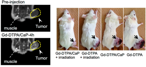 Images of mice bearing subcutaneous cancer tumors