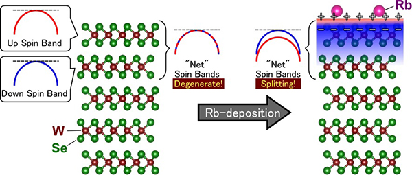 "Schematic showing the ""chemical gating"" effect by the alkali metal (Rb) deposition on the surface of a WSe2 crystal: the formation of a monolayer electron gas with spin band splitting takes place."