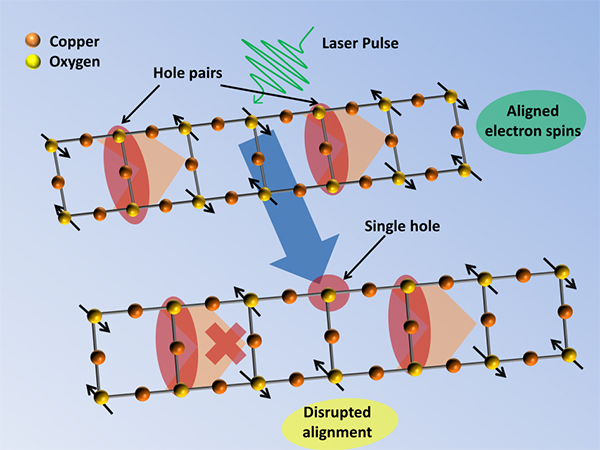 Illustration of a copper oxide ladder, showing the alignment of electron spins that allows hole pairs to travel along the ladder. Generating a new hole with a laser pulse disrupts the alignment of electron spins and makes it harder for the hole pairs to move along the disordered ladder.