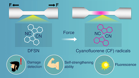 A Show of Force: Novel Polymer that Toughens Up and Changes Color Upon Mechanical Stress