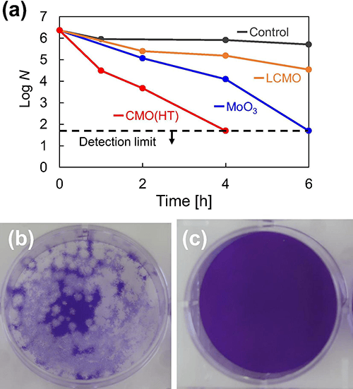 Figure 1.  (a) Antiviral activity of prepared powders against coronavirus and photographs showing the change in plaque number of coronavirus after four hours: (b) control and (c) with CMO.