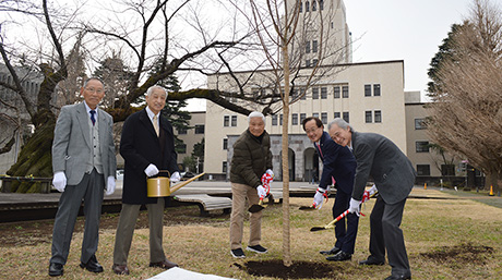 Gifts ensure sakura on Ookayama Campus for future generations