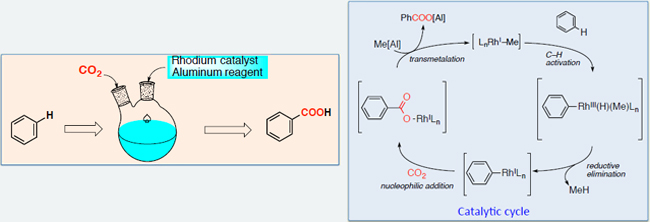 Synthesis of benzoic acid from benzene and CO2 utilizing rhodium catalyst