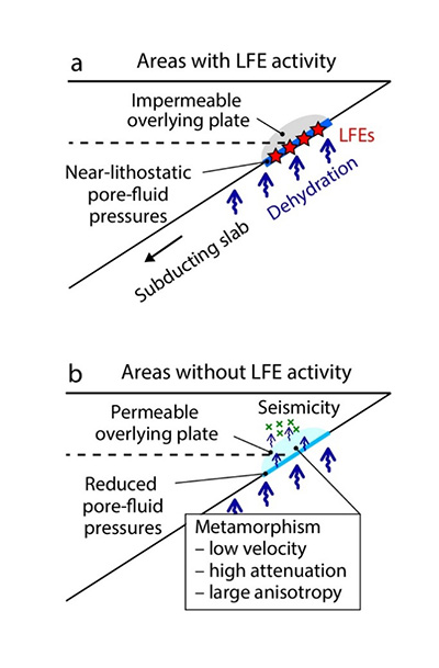 Schematic models for the development of pore-fluid pressure along the megathrust