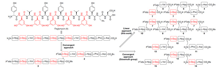 Comparison of synthetic strategies toward the total synthesis of feglymycin (1). Linear/convergent approach highlighted in this work and the convergent approached previously described by Süssmuth in 2009.