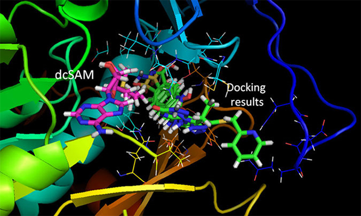 Results of the TcSpdSyn-ligand docking analysis.