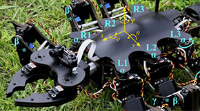Tokyo Tech's six-legged robots get closer to nature