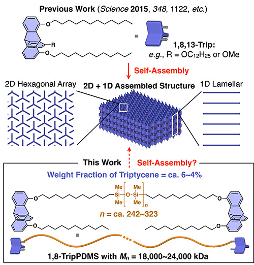 Self-assembling 2D+1D polymer structures