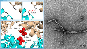 Nanotubes built from protein crystals: Breakthrough in biomolecular engineering
