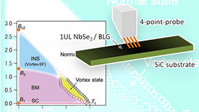 A peculiar ground-state phase for superconductor NbSe2 ―It's a Bose metal!