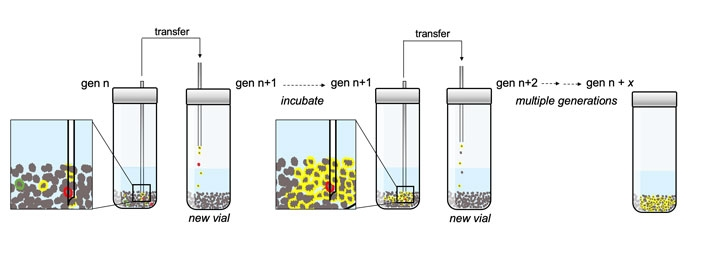 The researchers subjected their chemical soups to a form of selection by taking a small amount of material from one vial and placing it in a new vial with fresh pyrite and chemicals. After multiple generations, they found evidence of chemical networks, represented in yellow, spreading quick enough to avoid dilution. Credit: David Baum Lab