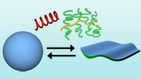 From 3D to 2D and back: Reversible conversion of lipid spheres into ultra-thin sheets
