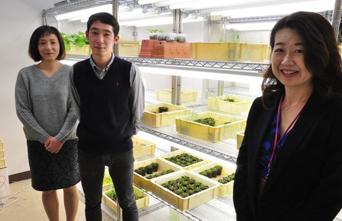 A new transgenic plant to produce biofuel