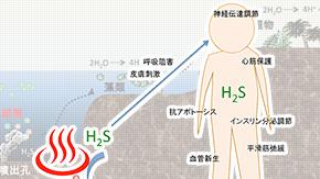 硫化水素に応答して遺伝子発現を調節するタンパク質を発見―硫化水素バイオセンサーの開発に道―