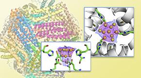タンパク質カゴの中で踊る金原子を観る―タンパク質結晶を使った金属イオン集積過程の観察―