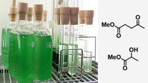 藻類オイル抽出残渣から化学品原料の合成に成功 ―藻類バイオマスを徹底的に活用する技術を確立―