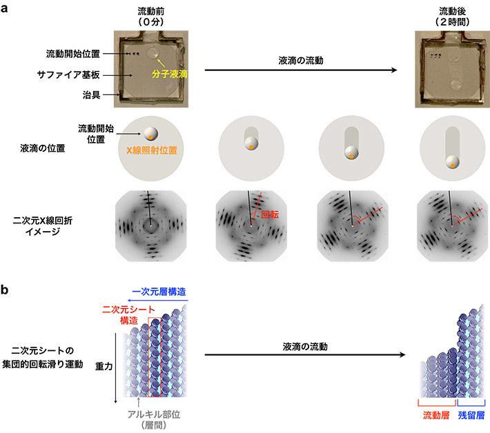 図2. (a) 分子液滴の回転流動と (b) 分子の回転滑り運動の方向が制御された集団運動の模式図
