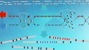 両親由来のゲノム配列を個別に決定する新手法