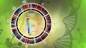 麹菌A. oryzaeの進化と家畜化の関係
