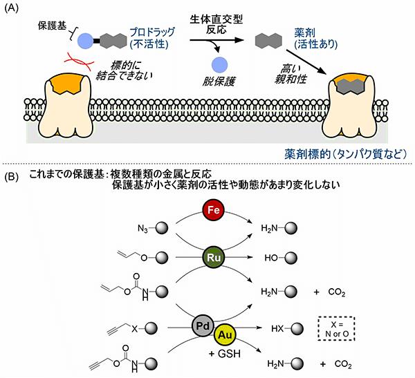 生体内の金属触媒反応で薬効と物性を制御する プロドラッグのデザイン ...